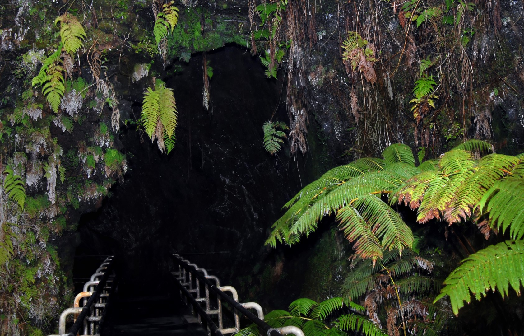 Fern Valley Big Island To The Lava Tube